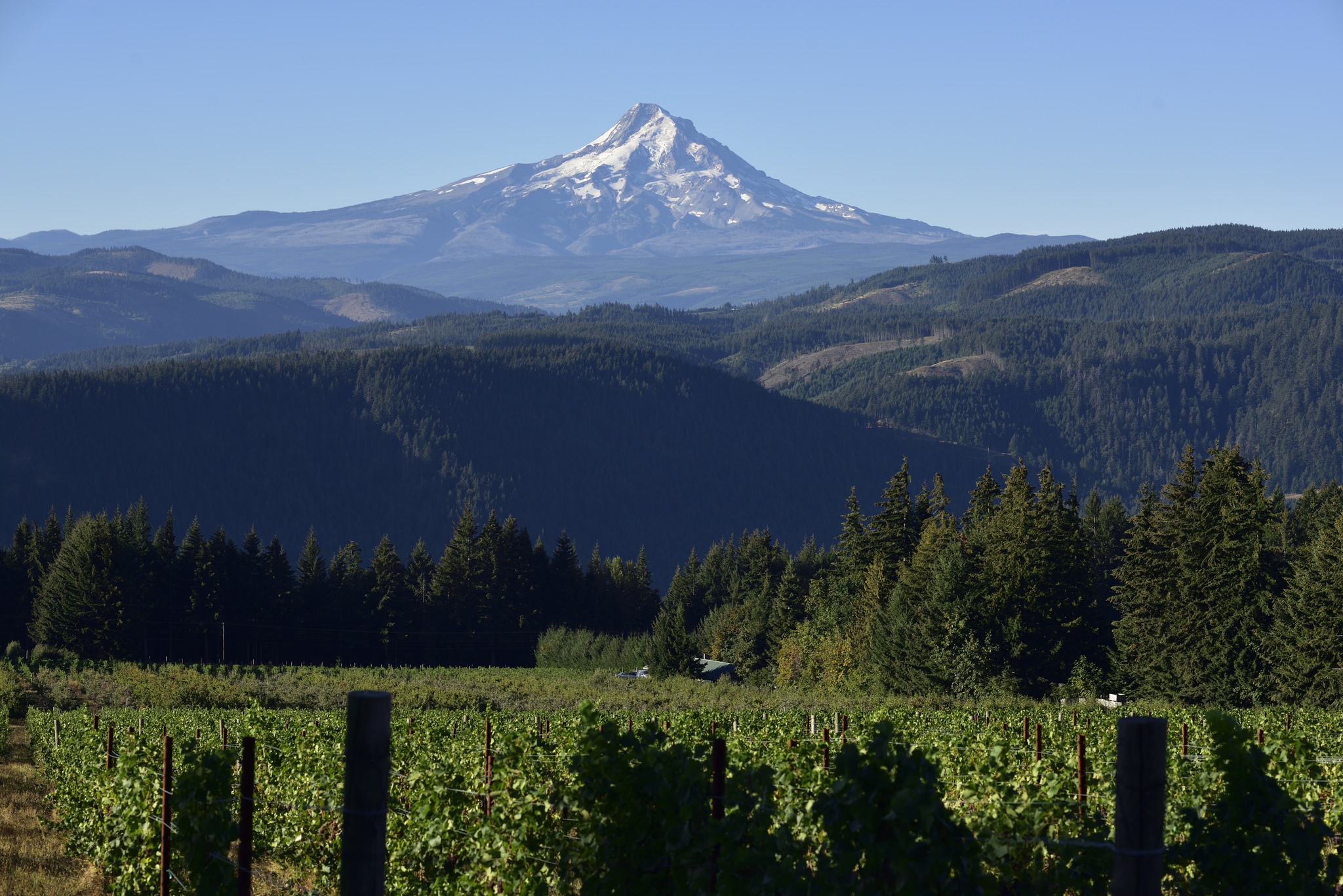Columbia Gorge WineTrail