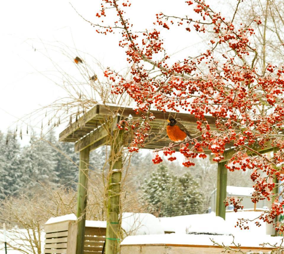 Oregon Garden - Silverton, OR