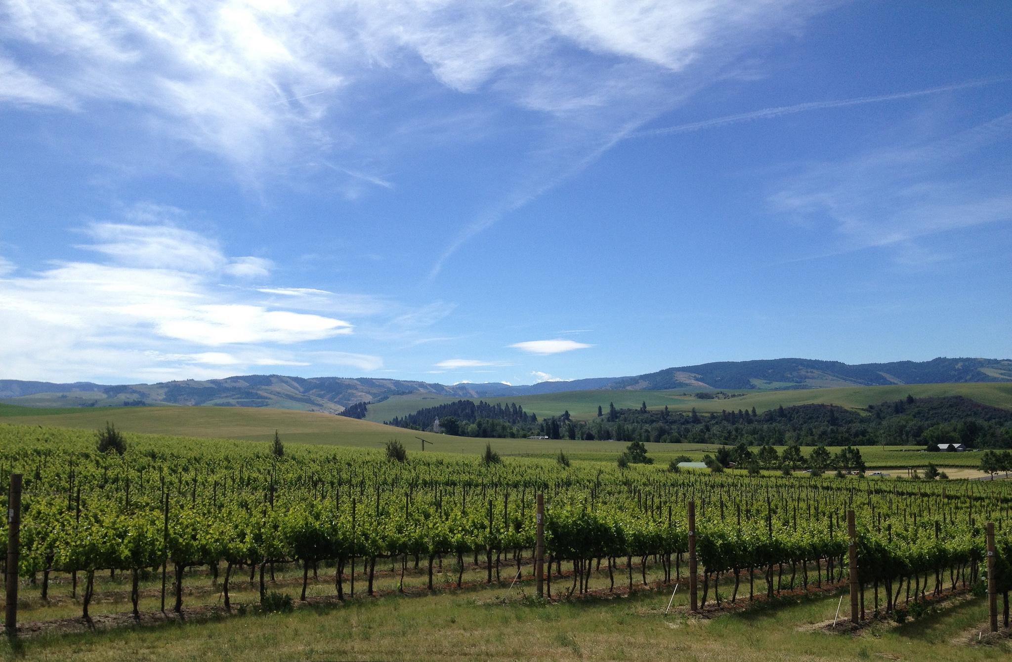 Walla Walla Wine Trail