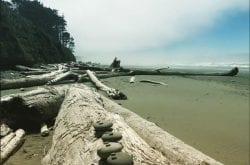 Top Spots For Beachcombing in the Northwest