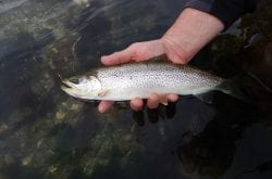 Meet Your Olympic Peninsula Fly Fishing Guide: Bob Triggs, Little Stone Flyfisher