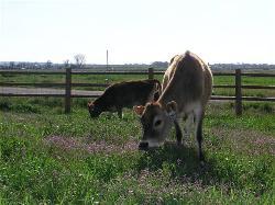 Ballard Family Dairy and Cheese