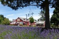 E.Z. Orchards Farm Market, Salem, OR