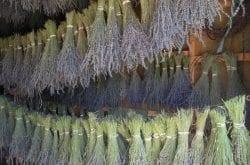 The Lavender Merchant - Kuna, ID