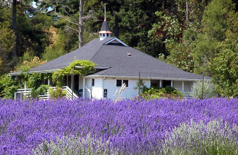 Pelindaba Lavender Farm - WA
