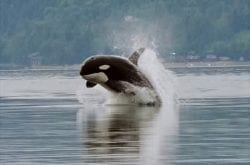 Top Places Around the Northwest To Spot Whales Without a Boat