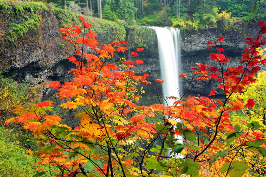 Fall Color Still Abounds at Silver Falls State Park: Our Photo of the Week