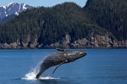What to See On Alaskan Cruise + Must-Visit Alaska Cruise Destinations