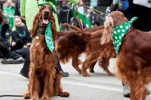 St. Patrick's Day Fests Abound: Our Best of the Northwest Photo of the Week