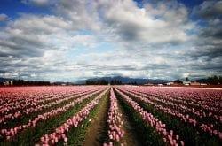 Spring Flower Celebrations