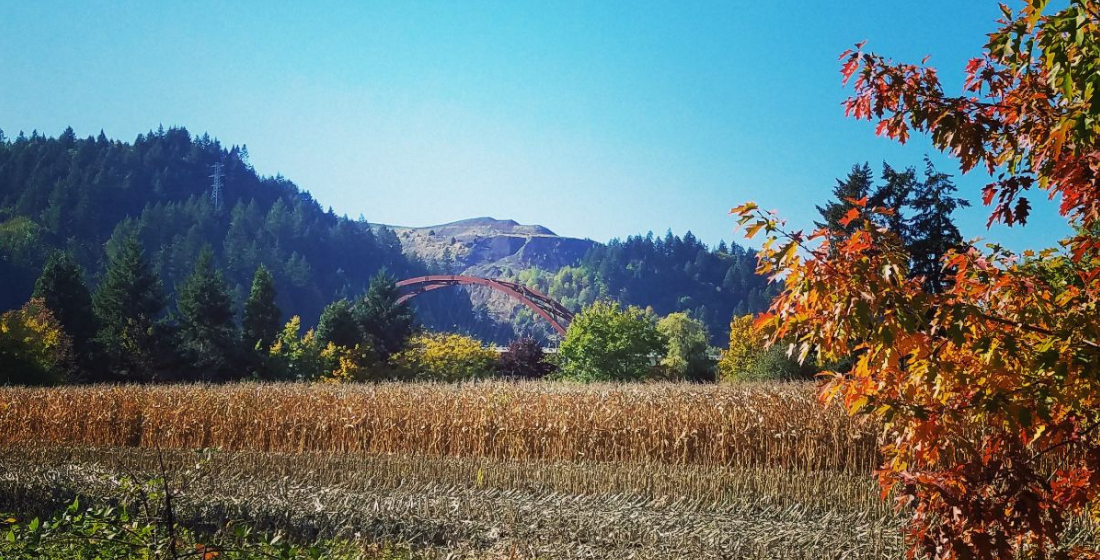 Sauvie Island Bridge Pumpkin Patch Portland Oregon