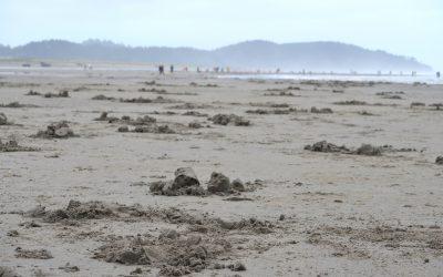 long beach wa clam festival