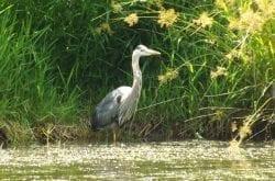 Ridgefield Wildlife Sanctuary