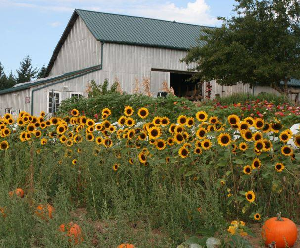 Plumper Pumpkin Farm