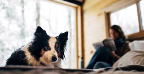 Getaway modern cabin rentals near Mt Adams