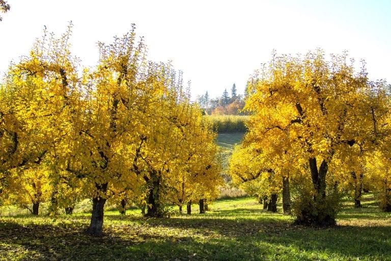 Hood River Oregon in autumn