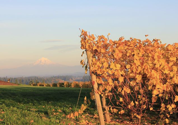 Pete's Mountain Vineyard in Oregon's wine country