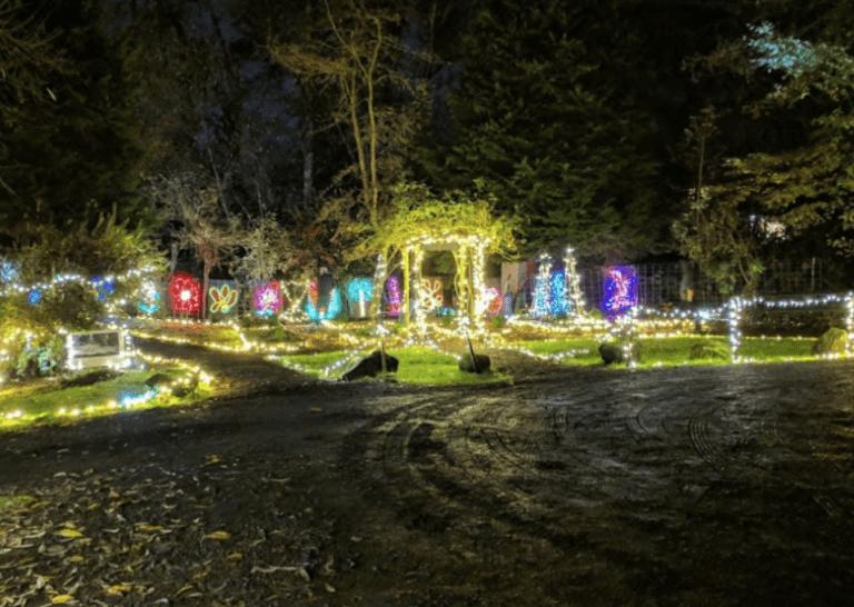 Lighting of Maddax Woods
