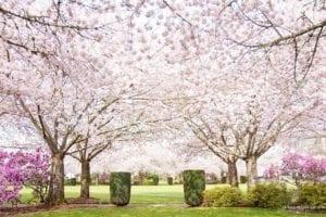 7 Historic Places to Visit in Downtown Salem, Oregon