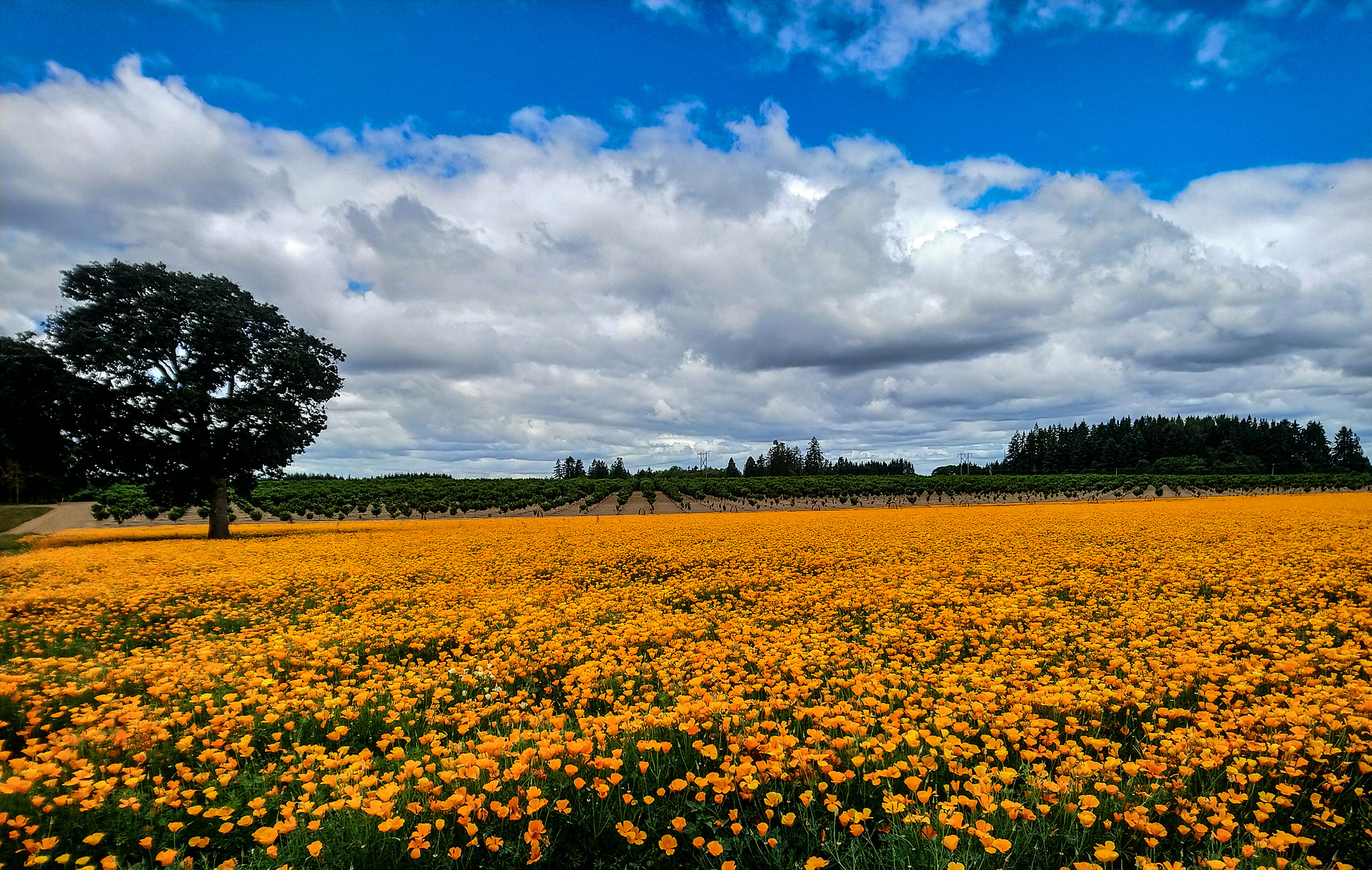 Marion County, Oregon – Our photo of the week
