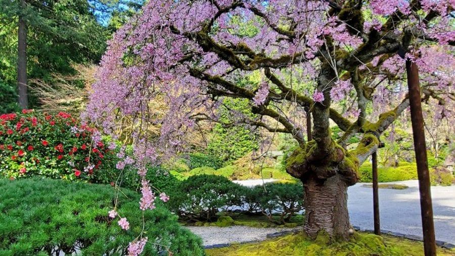 The Portland Japanese Garden