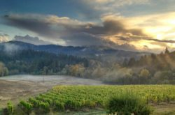 Lumos Winery Philomath Oregon