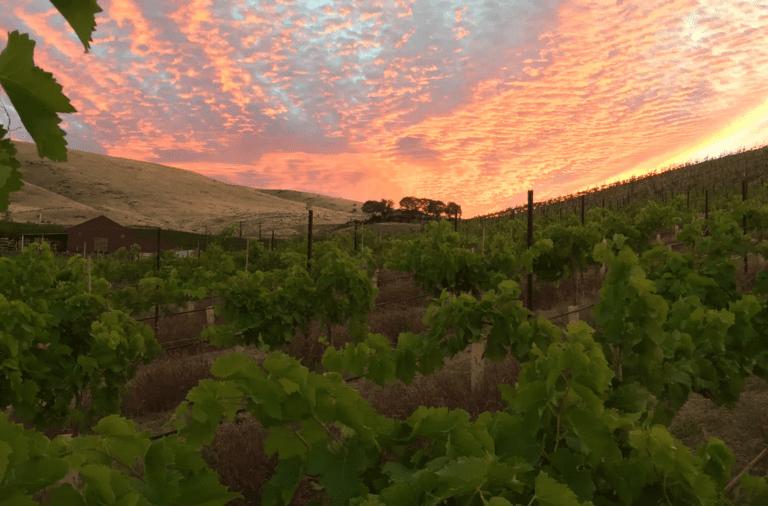 Owen Roe Winery Washington State